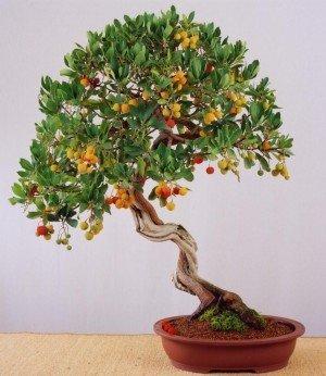 Uprawa drzewka truskawkowego w polskim klimacie