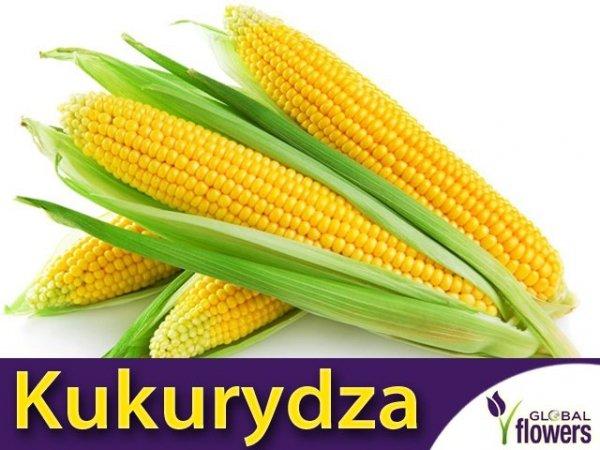 Kukurydza cukrowa Super Słodka Gucio