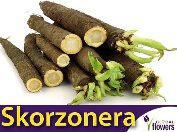 Skorzonera Duplex (Scorzonera hispanica) 3g