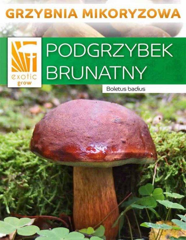 podgrzybek brunatny grzybnia uprawa