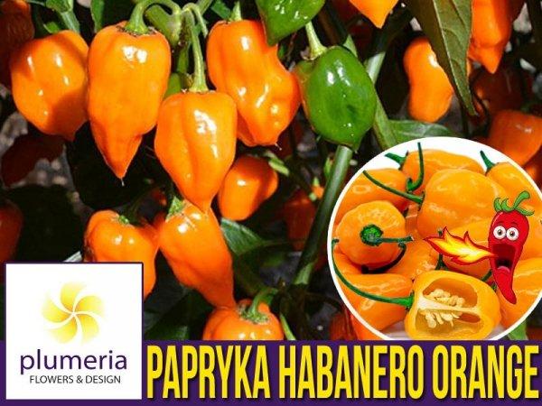 Papryka Chili HABANERO ORANGE (Capsicum annuum) nasiona