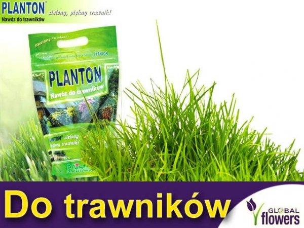 PLANTON® do trawników 1kg