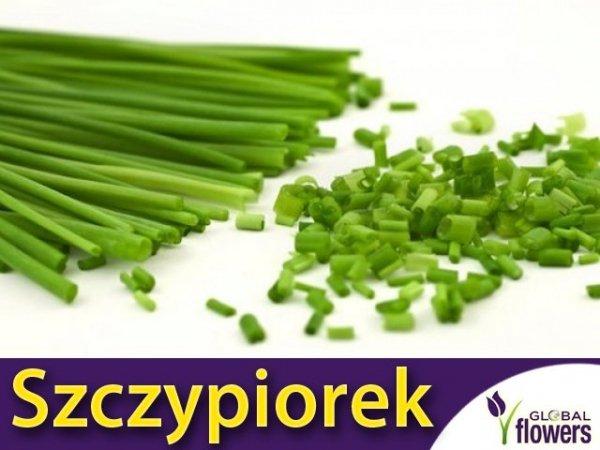 Szczypiorek Medium Leaf (Allium schoenoprasum)