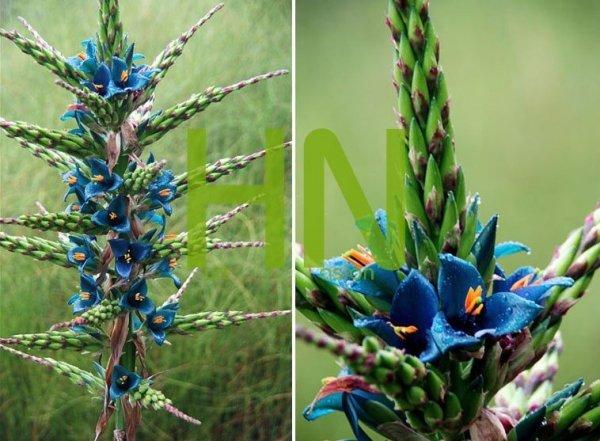 Metaliczny Kwiat