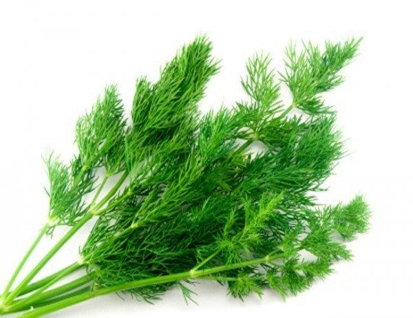 Koper ogrodowy Ambrozja (Anethum graveolens) 5 g