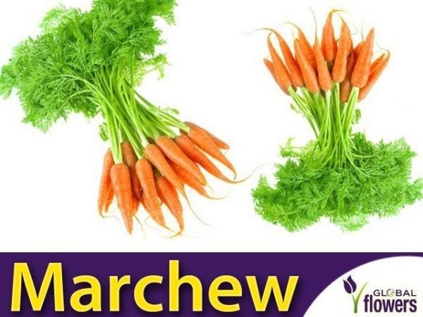 Marchew Pierwszy Zbiór Wczesna (Daucus carota) XXL 500g