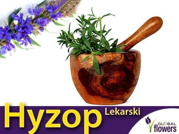 Hyzop lekarski  (Hyssopus officinalis) 0,20g