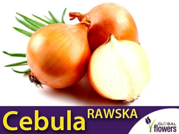 Cebula Rawska (Allium cempa) 5g