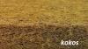 Materac JACUŚ KOMFORT Line  KOKOS-PIANKA  120/60/7,5 cm FIKIMIKI