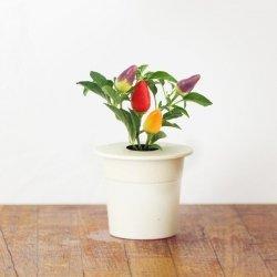 Kapsułki roślinne 3-pak papryczki chili