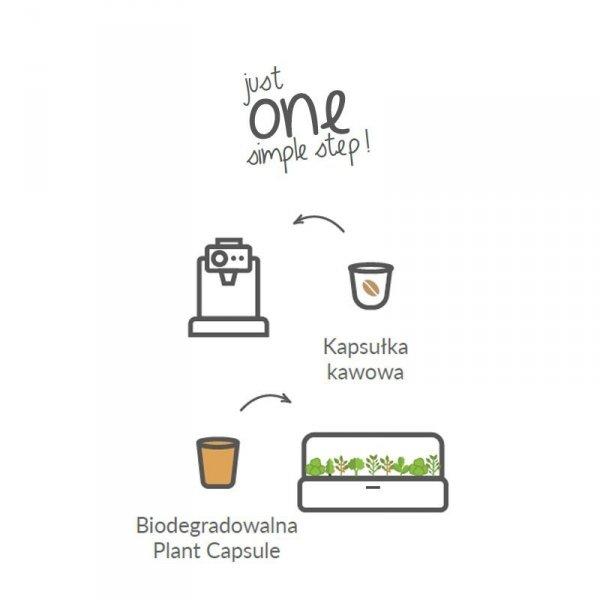 Kapsułki roślinne Click and Grow to najprostszy sposób na świeże zioła w twoim domu
