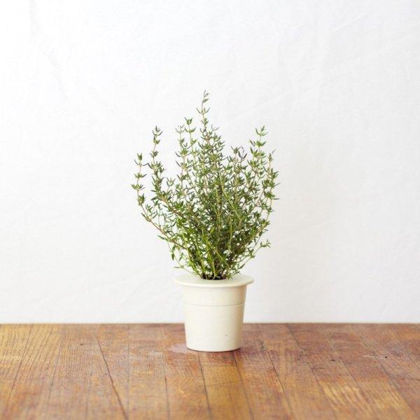 Kapsułki roślinne 3-pak Tymianek do nowoczesnych doniczek Smart Garden