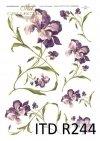 kwiaty, irys, irysy, z kwiatami irysów, fioletowe irysy, długie łodyżki, naturalna wielkość
