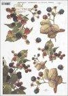 blackberries, blackberry fruit, blackberry bushes, fruit, R395