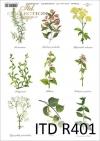 kuchnia, przyprawy, zioła, ziółka, zielnik, mięta, pokrzywa, rozmaryn,  R401