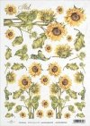flower, flowers, leaf, leaves, flower petals, sunflower, sunflowers, R410