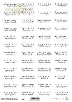 Translucent scrapbooking paper P0101