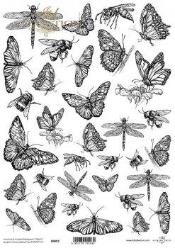 Translucent scrapbooking paper P0097