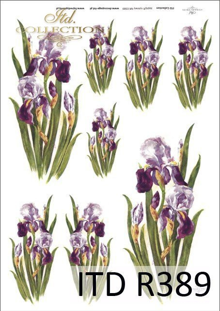 irys, irysy, kosaćce, kwiat, kwiaty, kwiatek, kwiatki, R389