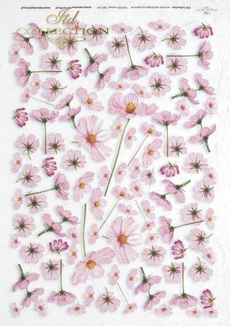 flower, flowers, cosmos, kwiatek Cosmos, Warszawianka, kwiat, kwiaty, R034