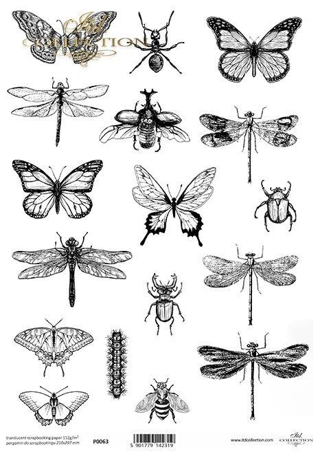 Pergamin do scrapbookingu, motyl, motyle, ćma, ćmy, owad, owady, ważka, ważki