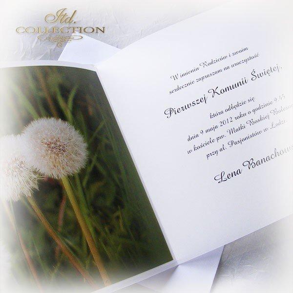 Holy Communion Invitation 1746_1_dandelion