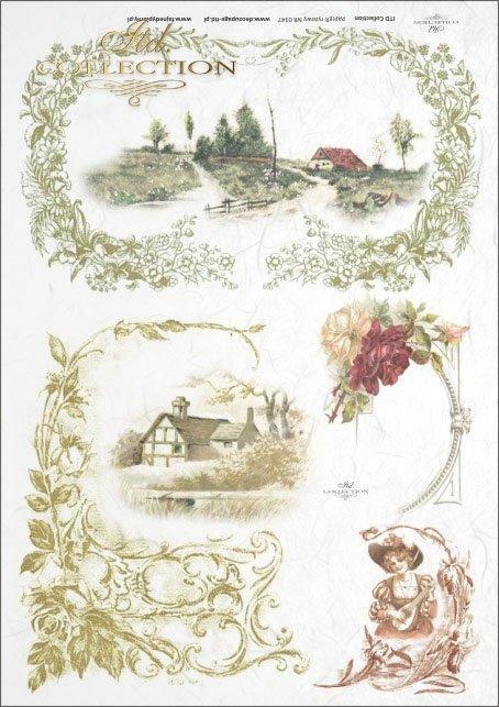 ornaments, plant ornaments, plant frames, leaves, flowers, views,