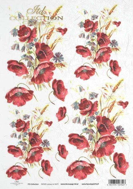 poppy, poppies, flower, flowers, R415