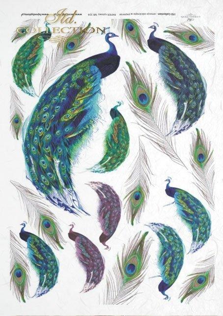 peacock, peacocks, peacock tail, peacock eyes, tren, feathers