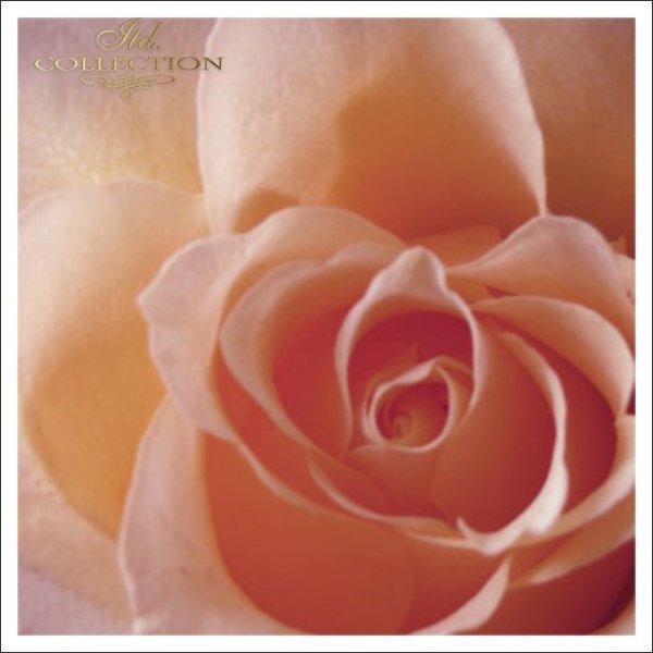 Zaproszenia ślubne / zaproszenie 1721_róża