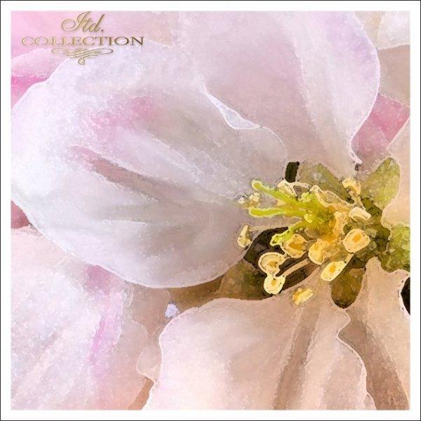 Zaproszenia ślubne / zaproszenie 1731_46_kwiat_jabł'oni
