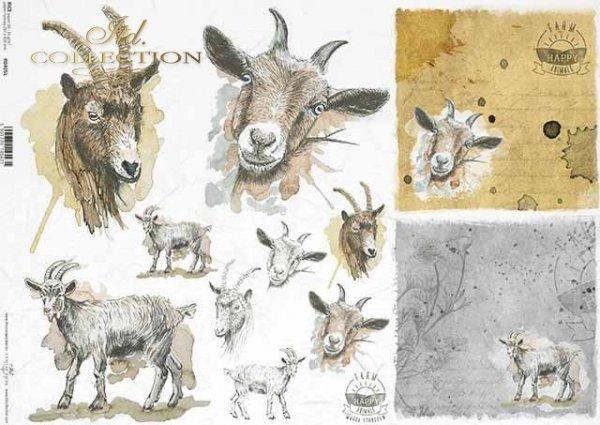R0405L * koza, młoda kózka, głowy kozy, napisy 'happy farm'