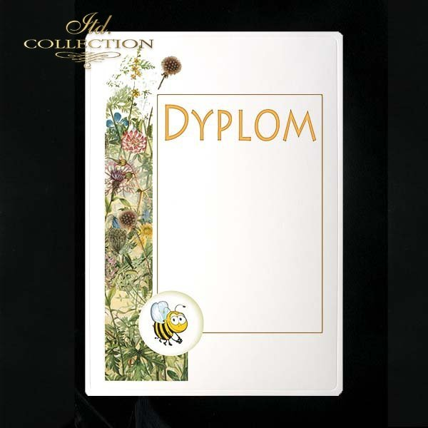 dyplom DS0240