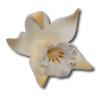 Katleja ecru malowana - 10 szt