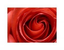inside the rose - reprodukcja