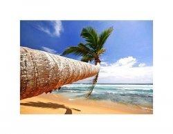 Tropikalna Plaża - reprodukcja