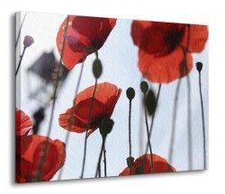 Obraz do salonu - Kwiaty - Czerwone maki - 120x90 cm