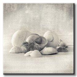 Obraz na płótnie - Muszelki - Still Life of Shells II - 60x60 cm