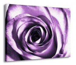 Purpurowa róża - Obraz na płótnie