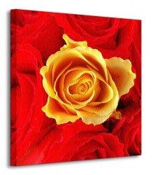 Róże, czerwone i żółta - Obraz na płótnie