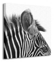 Cudowna Zebra! - Obraz na płótnie