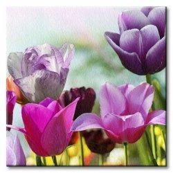 Obraz do salonu - Wiosenne Tulipany - 40x40 cm