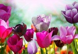 Fototapeta do sypialni - Piękne wiosenne kwiaty - 366x254 cm