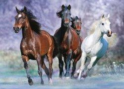 Bob Langrish Galopujące Konie - plakat