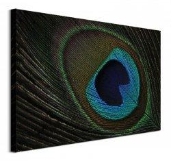 Peacock Feather Eye - obraz na płótnie