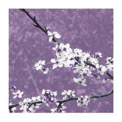 Blossom in Lilac - reprodukcja