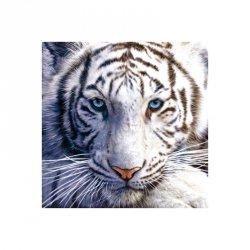 Biały Tygrys - reprodukcja