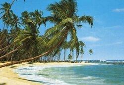 Fototapeta na ścianę - Tropikalne Palmy na Plaży - 366x254 cm