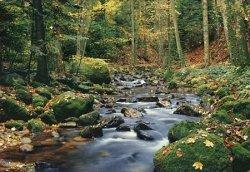 Fototapeta na ścianę - Leśny strumień - 366x254 cm