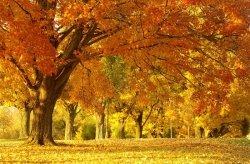 Fototapeta na ścianę - Jesienny Krajobraz - 175x115 cm